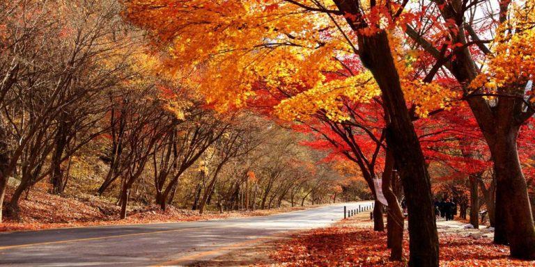 Mùa thu ở Đài Loan